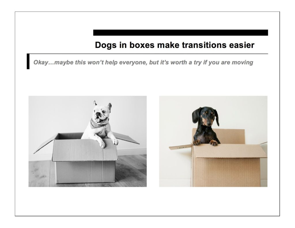 dogs in boxes help transitions